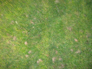 Aerating grass adds oxygen to the soil